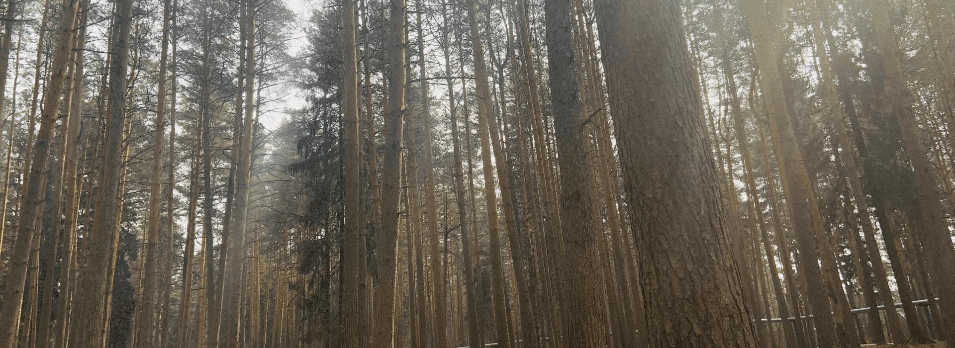 Площадь леса в мире