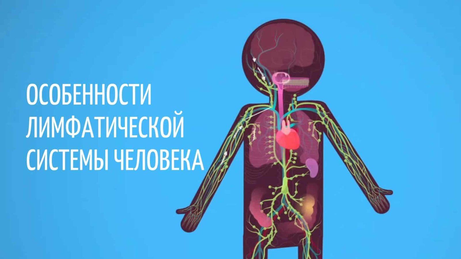Особенности лимфатической системы человека
