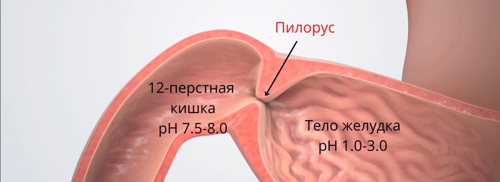 Клапан желудка не закрывается